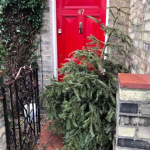A lonely tree ready to be collected and recycled by #TeamArthur