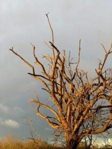 tree with grey sky
