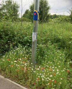 Wildflowers under the lampost leading to Arthur Rank Hospice